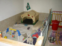 The puppy room - enough space to play and enjoy life.